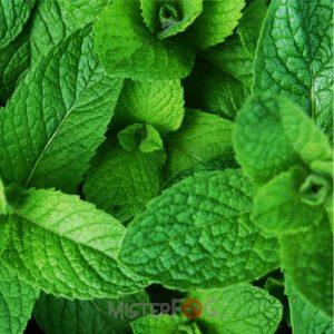 dea aroma mint