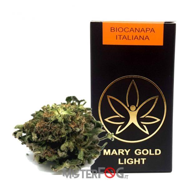 mary gold light infiorecenza fruits