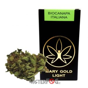 mary gold light infiorescenza canapa light bio 2